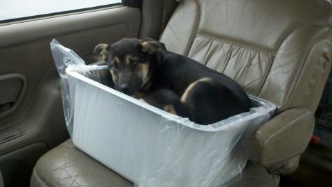Image Puppy!